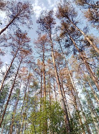 "Результат пошуку зображень за запитом ""димерське лісове господарство"""